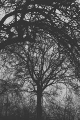 Magische Welten (One-Basic-Of-Art) Tags: annewoyand woyand anne 1basicofart onebasicofart fotografie foto photographie mono einfarbig monochrom monochrome black white schwarz weis weiss grau gris grey noir blanc baum tree äste ausblick fantastisch