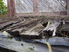 (not as) tough as nails (2) (photography_isn't_terrorism) Tags: wood decay floor deck rotting platform
