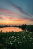 Sunset with Flowers (mesocyclone70) Tags: sunset sun sunrise sunlight flower flowers holland netherlands dutch canal water lake reflection reflections sky weather summer beautifull color colour colors colours colorfull colourfull green ngc