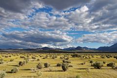 Grass and sky (Mono lake scenery) (eichlera) Tags: mono lake usa california west coast desert steppe grass grassland sky bushland clouds outdoors hills rocks