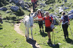 "Picos de Europa 2017 217 <a style=""margin-left:10px; font-size:0.8em;"" href=""http://www.flickr.com/photos/122939928@N08/35948130912/"" target=""_blank"">@flickr</a>"