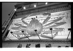 161120 Roll 451 gr1vtmax636 (.Damo.) Tags: 28mmf28 japan japan2016 japannovember2016 roll451 analogue epson epsonv700 film filmisnotdead ilfordrapidfixer ilfostop japanstreetphotography kodak kodak400tmax melbourne ricohgr1v selfdevelopedfilm streetphotography tmax tmaxdeveloper xexportx