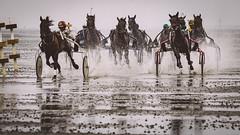Duhner Wattrennen (TS_1000) Tags: cuxhaven duhnen wattrennen pferderennen watt nordsee niedersachsen olympus ebbe pferde rennen
