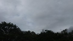domingo, 16/07/17 ☁ Vitória, Espírito Santo (ohmystunning) Tags: céufienanuvem céufie skyfie sky blue cloud clouds nuvem nuvens céu nublado photography fotografia vitória espírito santo es july nature tree streets city summer