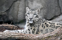 Emotional moment (asterix_93) Tags: snow look watch beauty grace model cute star nikon d810 leopard monalisa mona lisa joconde