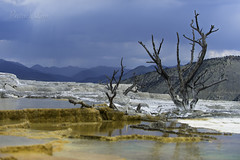 Sulfuric Landscapes (PatrickLim1996) Tags: landscape beauty volcano tree death nature photography yellowstone colors