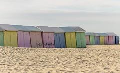 IMG_0425 (Azezjne (Az photos)) Tags: canon 75300 50 stm 600d berck sur mer bercksurmer cote côte dopale bromance plage sable bokeh zoom coucher soleil sunset beach sand eclipse dune mouette animaux animalière flou 75 300