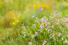 (kuuan) Tags: mf manualfocus m42 yashinon autoyashinonf25cm meadow wiese mostviertel austria flowers colors blumenwiese bokeh macro helicoidadapter closefocusadapter