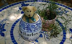 Bear in a Barrel (BKHagar *Kim*) Tags: bkhagar bear teddy teddybear barrel ceramic barley table plant china tile tiled htbt napoleon
