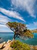 Tree (milo42) Tags: httpwwwloveoflandscapecom gopro httpwwwchrisnewhamphotographycouk 2017 bajasardinia sardegna italy it landscapesshotinportraitformat
