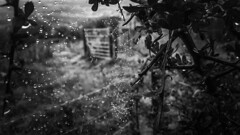 Rain...  framed (Kathryns Photography) Tags: rainyday framed summer contrast iloveblackandwhite loversoflight spiderweb britishweather leadinglines