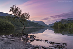 That Tree Llyn Padarn (marc_leach) Tags: thelonetree llynpadarn llanberis snowdonia snowdon northwales landscape sunrise nikon