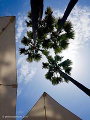 199/365 - My usual view (phil wood photo) Tags: 2017 2017photofun 365 clouds day199 hotel majorca mallorca palmtrees parasols sacoma sky