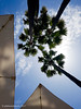 199/365 - My usual view (phil wood photo) Tags: 2017 2017photofun 365 clouds day199 hotel majorca mallorca palmtrees parasols sacoma sky
