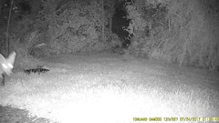 TrailCam372 (ohange2008) Tags: trailcam essexgarden foxes monkeynuts peanuts dogfood july