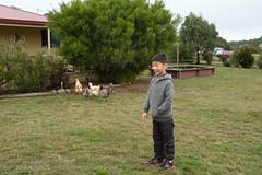 I want some chickens (Stinkee Beek) Tags: heatherbellcottage tasmania hobart australia ethan