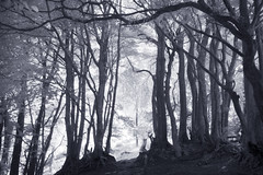 Into the forest. (IR) (Sean Hartwell Photography) Tags: wellingtonmonument wellington somerset infrared ir wood woodland trees monochrome magical mysterious