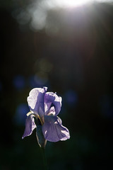 Deep Light Garden (NathalieSt) Tags: chateau chateaudeflaugergues europe flaugergues france hérault languedocroussillon montpellier occitanie cave nikon nikond750 nikonpassion nikonphotography