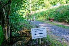 Le GR 78 appelé chemin du Piémont pyrénéen passe par St Pé (alainlecroquant) Tags: coteauxdesaintpédebigorre saintpédebigorre coteaux abbatiale palombière randonnée hautespyrénées vaches lavoir ferme cheval vtt fleurs