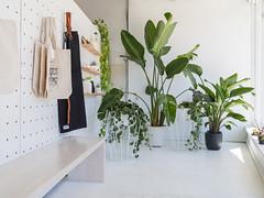 500px_AviaryTestShots_StephanieBraconnier-11 (hotcommodity) Tags: theaviary coworking vancouver fraserhood architecture interior design naturallight plantheaven creative