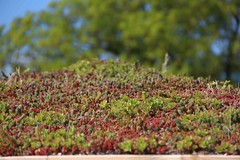 "Sedum roof • <a style=""font-size:0.8em;"" href=""http://www.flickr.com/photos/61957374@N08/36116282316/"" target=""_blank"">View on Flickr</a>"