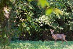 A guest in the backgarden (Denis Bourez) Tags: saintjeandelamotte paysdelaloire france fr olympus omd em5 animal