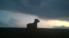 Sunrise & dark skies closing-in on running partner's silhouette, East Anglia, England (Jo. Jo.) Tags: sunrise cloud sky arable land east anglia england spring st georges day 23 april red fox labrador retriever silhouette
