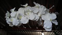 Exposição de flores no Mercado das Flores - Ceasa - São José do Rio Preto-SP, Brasil (J. Garcia Dias) Tags: arte artesanato mercado flores ceasa rio preto brasil brazil exposição