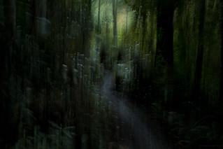 inside the green dream