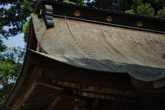 DP3Q2385 (chihiro2014) Tags: miyashita ibarakiken 日本 jp