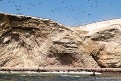 Islas Ballestas (takashi_matsumura) Tags: pisco peru islas ballestas paracas ica ngc nikon d5300 fauna nature sigma 1750mm f28 ex dc os hsm
