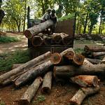 Teak log yard thumbnail