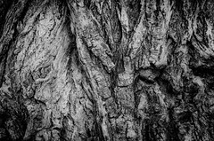 Árbol en blanco y negro (Dominik Haeberlein) Tags: tree black white textures background fondo