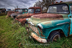Roadside Rust - Row of Rust (Don3rdSE) Tags: 3rdsiblingphotography don3rdse canon canon50d 50d eos september2010 ia iowa flagler country farm rust trucks car ford chevrolet relic decay overgrown studebaker pickup weeds
