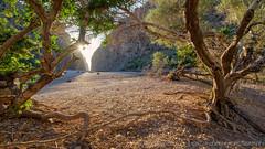 The Gate / La Puerta (el vuelo del escorpión) Tags: isla island mallorca baleares balearicislands españa spain tree trees rocas rocks summer torrente mediterranean mediterráneo
