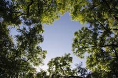 Through the canopy (DaveStrong) Tags: canon 5d mark 5dmarkii 5dii 5d2 5dmark2 markii mark2 2 ii 24105 24105mm 24105l 24105f4 24105mml spain barcelona summer holiday vacation