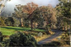 A Pretty Scene Near Glenfern. (Trains In Tasmania) Tags: australia tasmania glenfern moogara tasmanianscenery tasmaniancountryside trees countryside scene pretty colour mist fog road lane view canoneos550d ef35350mm13556lusm derwentvalley trainsintasmania stevebromley
