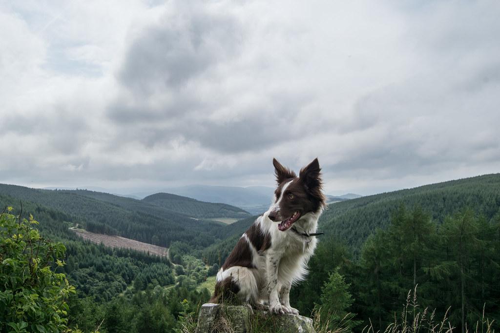 Best Dog Walking Forest Scotland