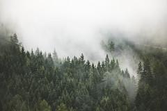 my Muse (Karin Ziegler) Tags: fog forest woods woodland mist nature treetops styria austria morning nikon steiermark f8