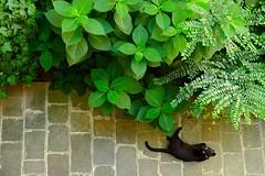 The Subject (Fabio Besostri) Tags: catmoments black cat gatto gattino kitten nero