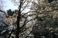 New Day... (Revisited) (emotiroi auranaut) Tags: day hope nature blossoms flowers trees sky tree hopeful mood music song mastershot peace tranquility tranquil japan tokyo shinjukugyoemmae park