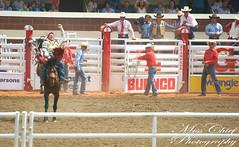 DSC02129 (♥ MissChief Photography ♥) Tags: calgary calgarystampede2017 canada rodeo horses cowboys bulls bullfighters