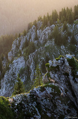 Chamois de Chartreuse (larbinos) Tags: chamois montagne montain chartreuse alps alpes paysage landscape pentax k5 grenoble isère igersgrenoble albin larbinos travel randonnée 2017 été summer nature animal sunset