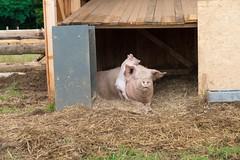 GoUrban_170727_Farm_127