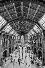 Natural History Museum, London, UK (davidgutierrez.co.uk) Tags: london architecture art city blackandwhite davidgutierrezphotography nikond810 nikon interior londonunderground urban travel blackwhite photography people londonphotographer property museum uk photographer england unitedkingdom 伦敦 londyn ロンドン 런던 лондон londres londra europe beautiful cityscape davidgutierrez capital structure britain greatbritain ultrawideangle afsnikkor1424mmf28ged 1424mm d810 street arts person centrallondon buildings design symmetry building indoor interiors hope naturalhistorymuseum bluewhale skeleton bluewhaleskeleton hintzehall southkensington history nhm monochrome bw black white blackandwhitephotography