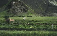 2+1 (Fahad0850) Tags: leica m m240 nature green iceland horses horse
