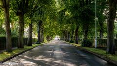 The Avenue, Bushey, England (PapaPiper) Tags: england bushey hertfordshire trees avenue theavenue eveninglight shade perspective road light summer highway