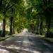 The Avenue, Bushey, England