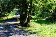 On longe la propriété (alainlecroquant) Tags: coteauxdesaintpédebigorre saintpédebigorre coteaux abbatiale palombière randonnée hautespyrénées vaches lavoir ferme cheval vtt fleurs