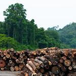Pile of logs thumbnail